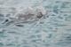 Der goldene Rettungsschwimmer